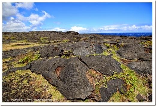 140724_HawaiiVolcanoesNP_0077