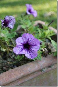 Serena's Flowers 2