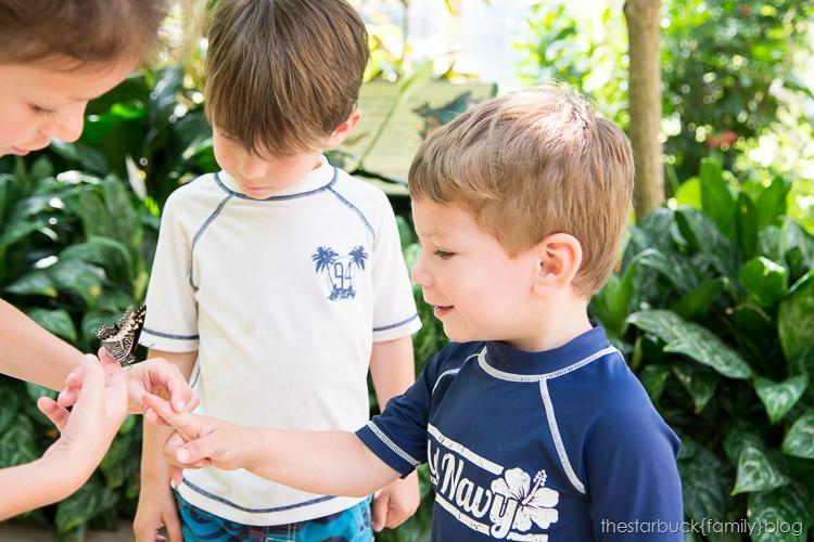 Callaway Gardens butterfly garden blog-22