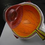 z_model_eye.JPG