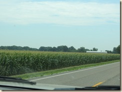446.Corn fields
