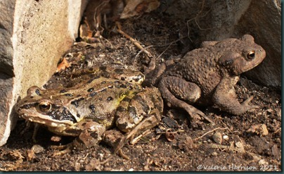 8 frog-and-toad
