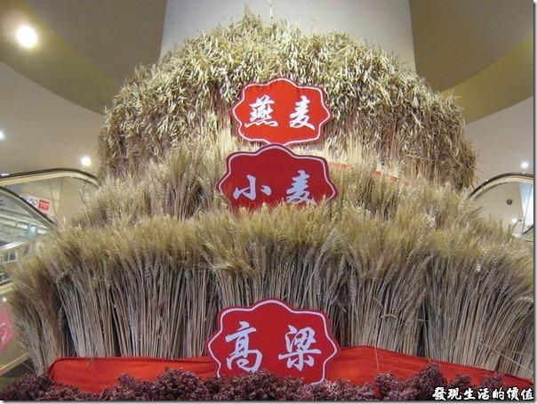 上海-西貝攸面村。燕麥、小麥、高粱。