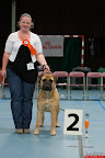20130510-Bullmastiff-Worldcup-0480.jpg