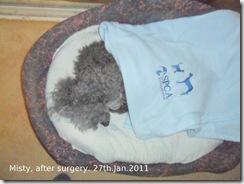 After emergency pyometra surgery