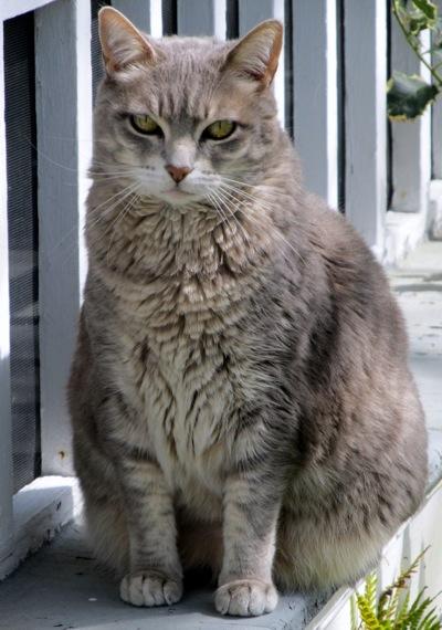 Cat inchworm  5