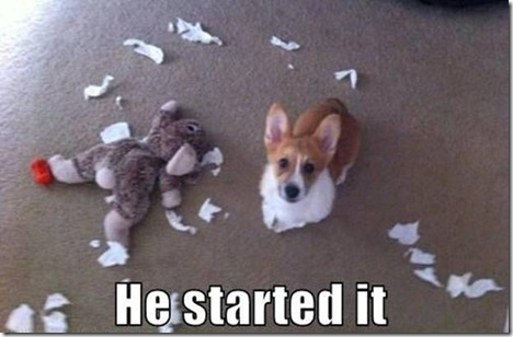A Corgi in trouble