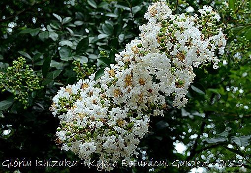 Glória Ishizaka -   Kyoto Botanical Garden 2012 - 38