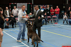 20130510-Bullmastiff-Worldcup-1213.jpg