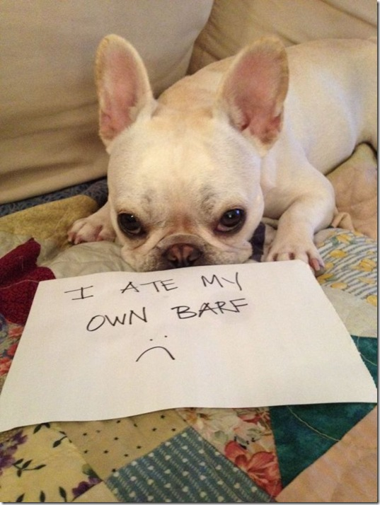 dog-shaming-bad-38
