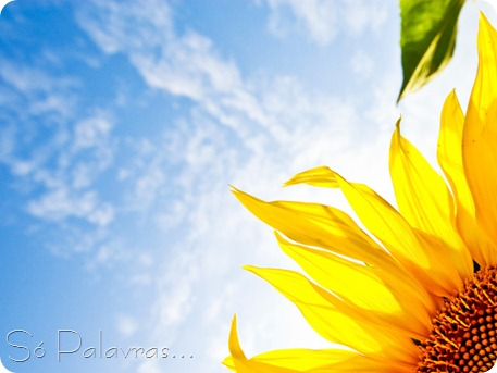 Nature_Flowers_Bright_Sunflower_029474_