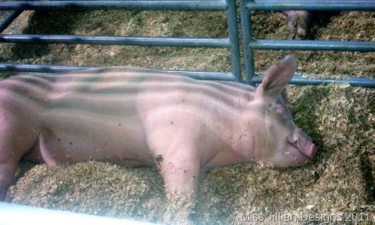 Big Ol' Piggy