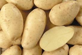 Ε.Α.Σ.: Μόνο ο πιστοποιημένος πατατόσπορος αποζημιώνεται από τον ΕΛΓΑ