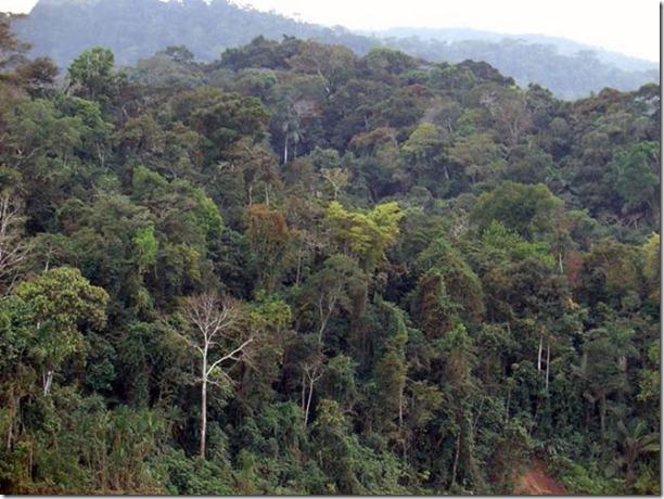 beautiful-amazon-rain-forest-27
