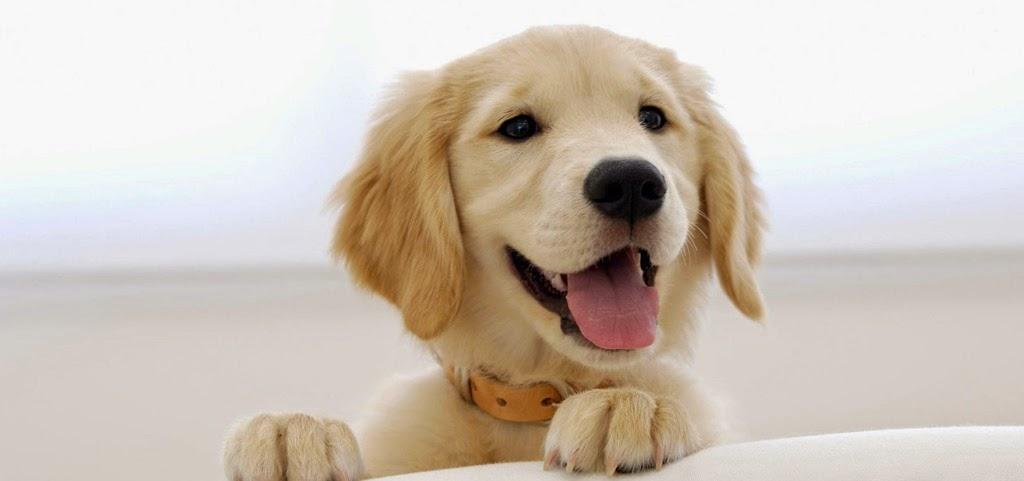 [cute-smiling-puppy-full-hd-wallpaper-1080p%255B5%255D.jpg]