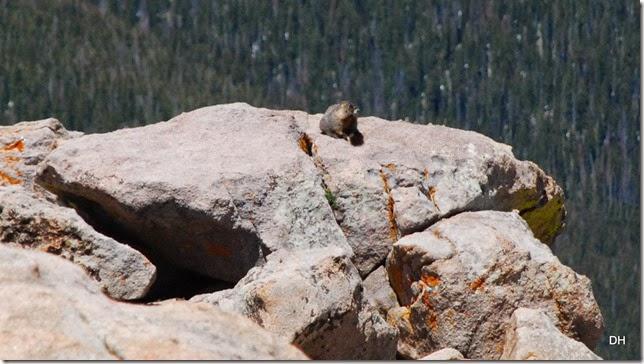 06-19-14 A Trail Ridge Road RMNP (133)