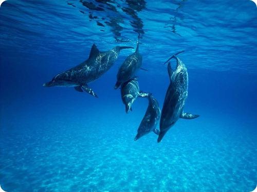 delfini7