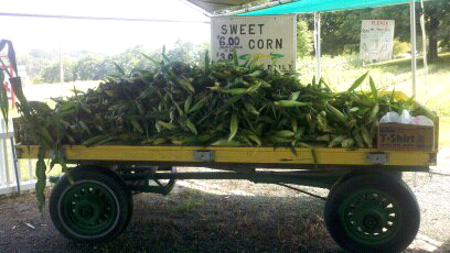 fresh corn from the farm