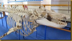 141030 160 Eden Killer Whale Museum