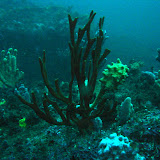 2009-08-29 Diving in Sydney