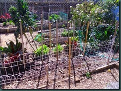 Vegetable garden, Before 002