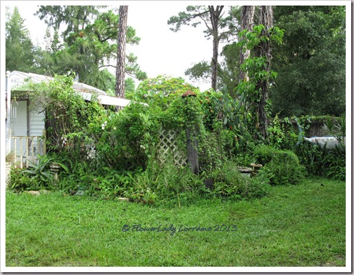 07-19-back-garden