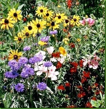 Flores Silvestres Mix