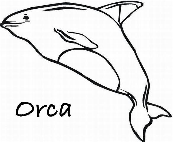 ORCAS DIBUJOS PARA COLOREAR