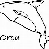 cartoon-whale-coloring-pages-31_LRG.jpg