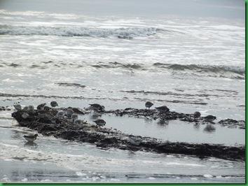 Ocean front walk 018