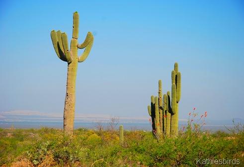 1. Saguaros-kab
