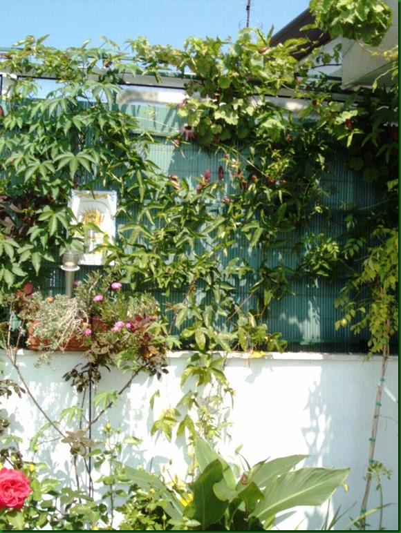 flores verano 2005 051