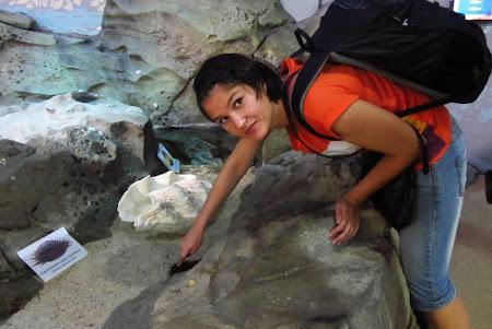 Imagini Australia: Sydney  Atingand un arici de mare in zona de Touch me de la zoo