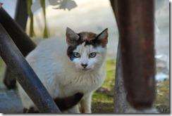 gato DSC_052117
