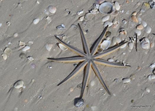 Sunstar on the beach