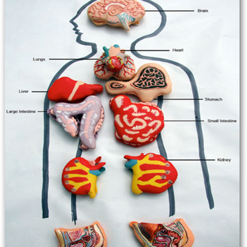 """Cookie"" Anatomy–Scientifically Decorated Cookies To Snack On, Vanilla Flavored Lungs, Brains, Intestines, and More…"