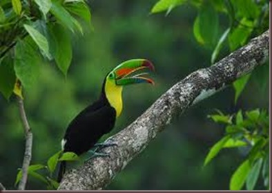 Amazing Pictures of Animals photo Nature exotic funny incredibel Zoo, Ramphastidae, Toucan, Bird, Alex (16)