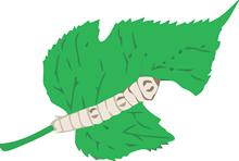 gusano de seda3 blogcolorear com (2)