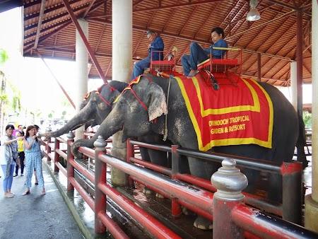 18. elefanti Thailanda.JPG