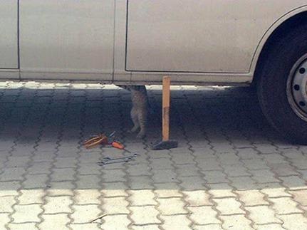 Gato Mecânico