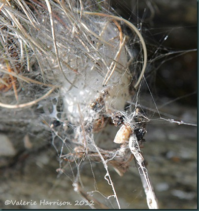 46-spiders-nest
