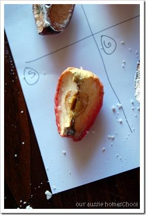 mummified apples