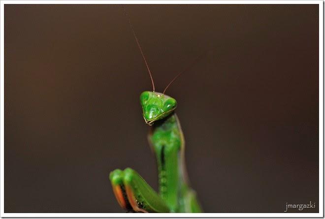 la-sonrisa-de-la-mantis