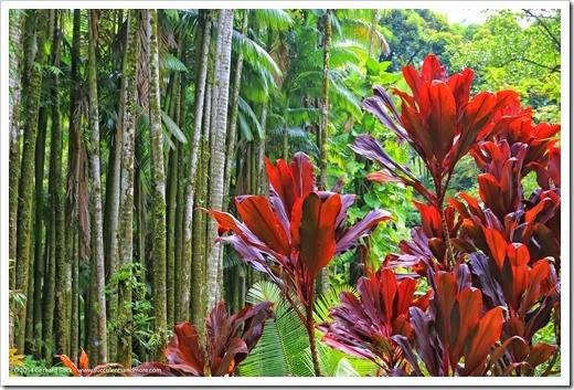 140726_HawaiiTropicalBotanicalGarden_0048