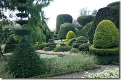 Levens Hall topiary 4