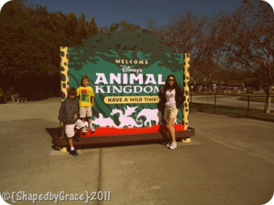 dworldanimalkingdom