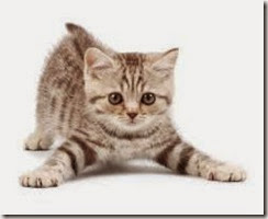 pictures-of-cats_1404251711