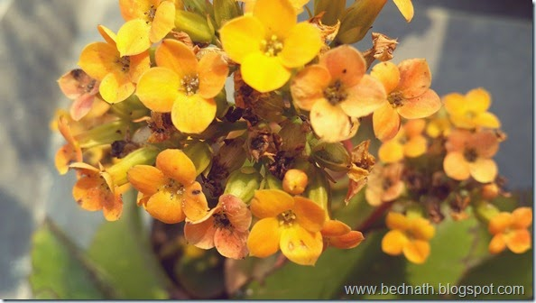 bednath blog (3)