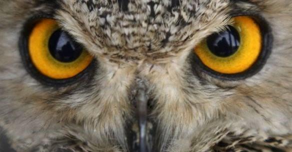 olhos_da_coruja2