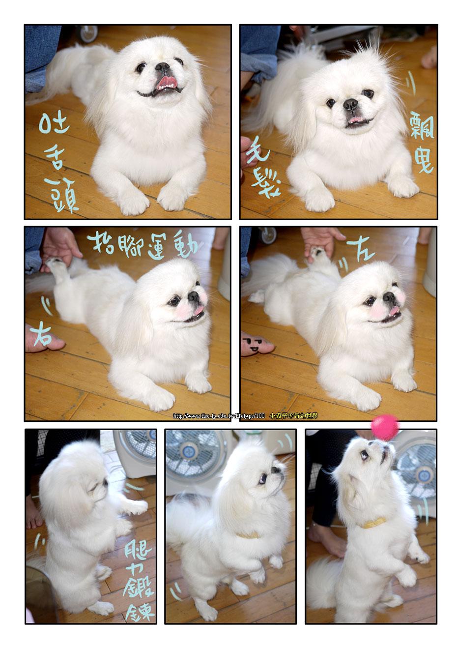 dog_blog4.jpg